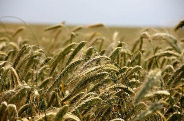 Agriculture Software Deep Dive – History & Market Dynamics